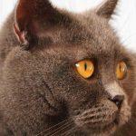 #CatKidneyStones #CrazyCatLady #CatCare
