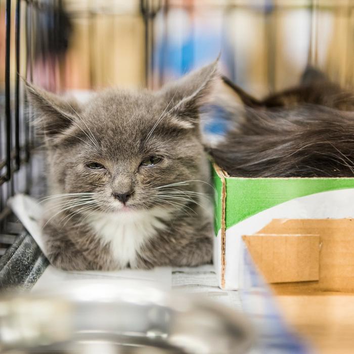 #CrazyCatLady #CatCare #CatPlaytime cat playtime