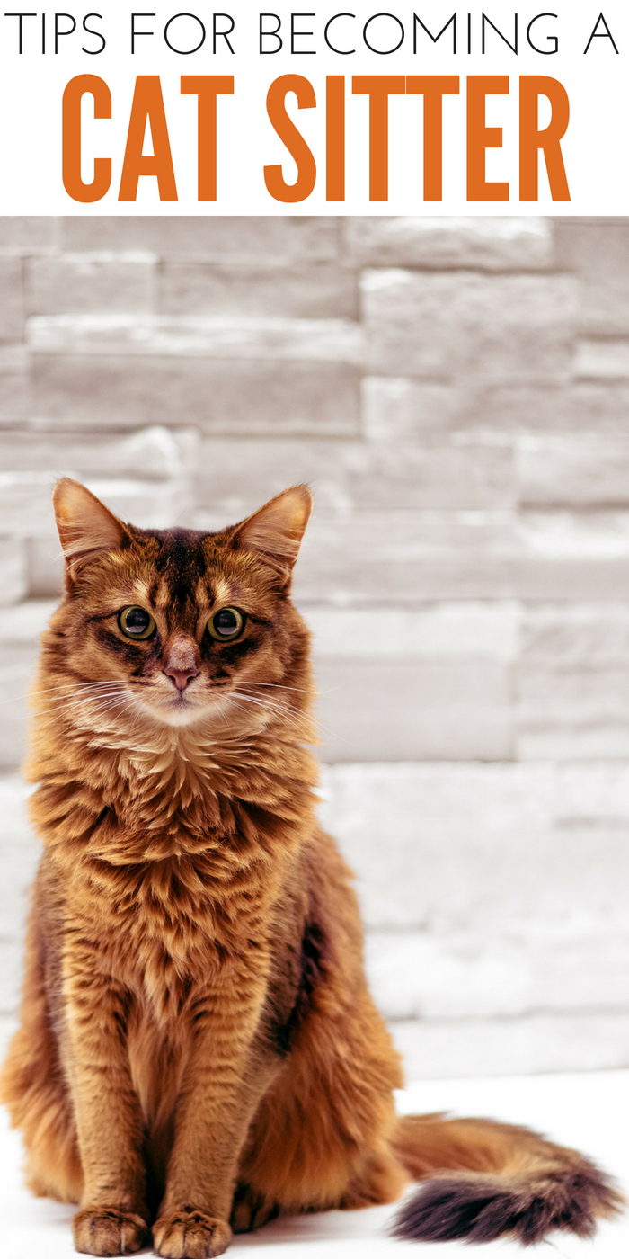 #CrazyCatLady #CatSitter #CatLover cat sitter