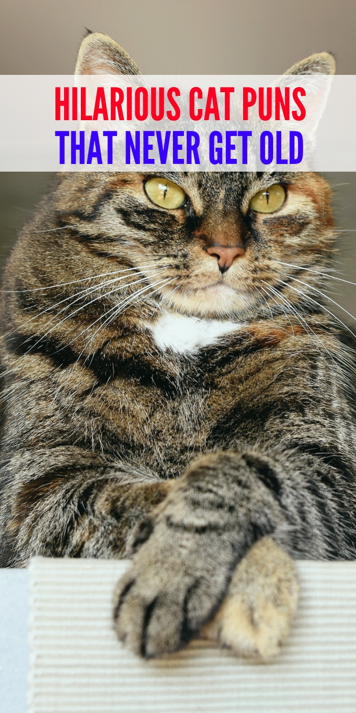 cat puns, cat jokes