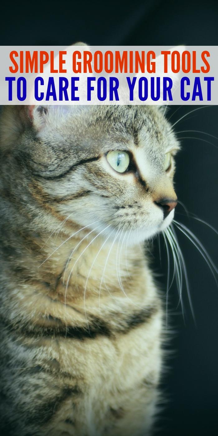 how to groom your cat; cat combs