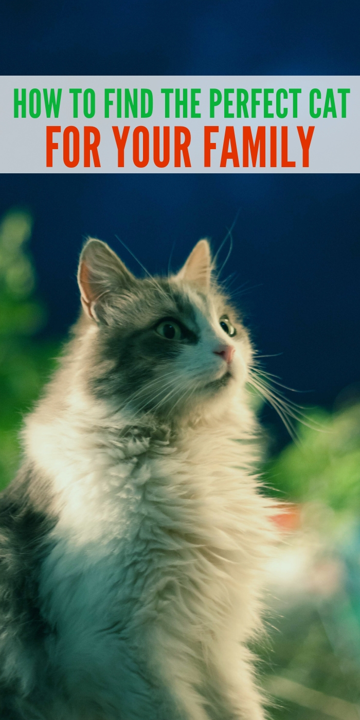 how to find the perfect cat for your family