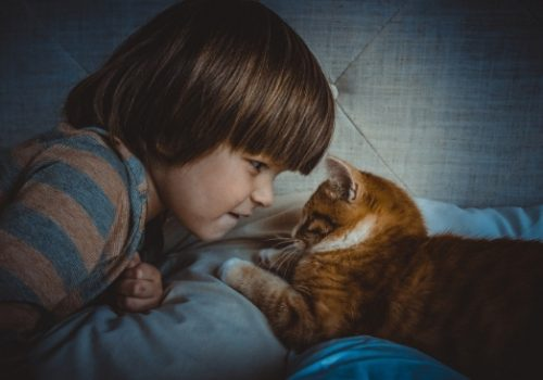 owning your first cat
