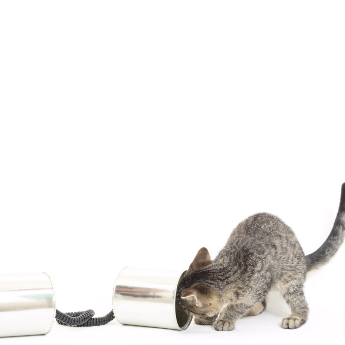 top toys for your cat