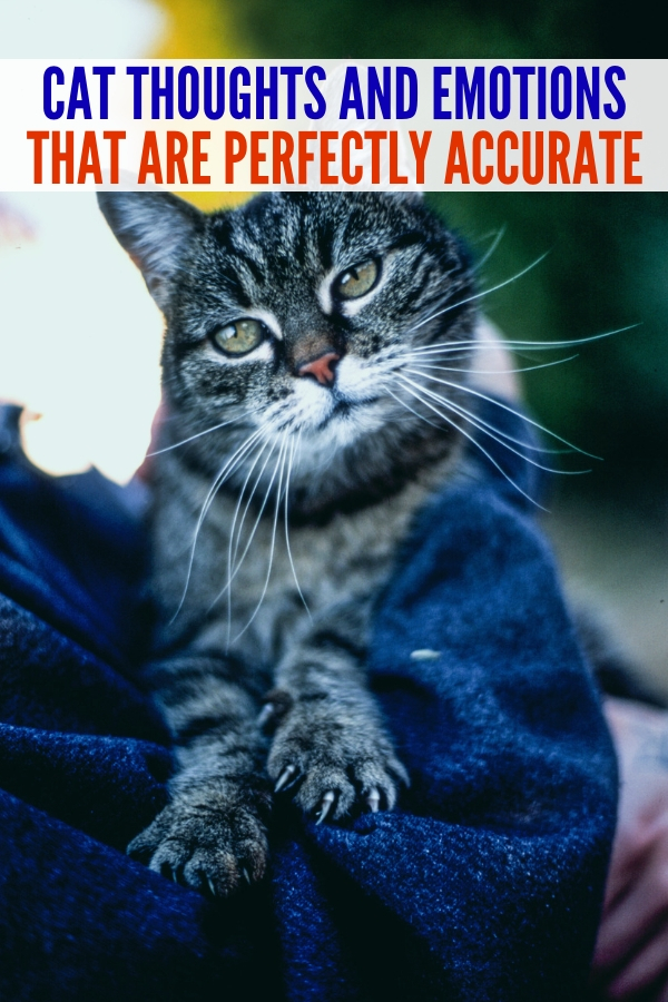 Do you ever wonder the cat thoughts from your furry feline friend? Cats have so many thoughts and emotions each and every day! #imacrazycatlady #catthoughts #catlife