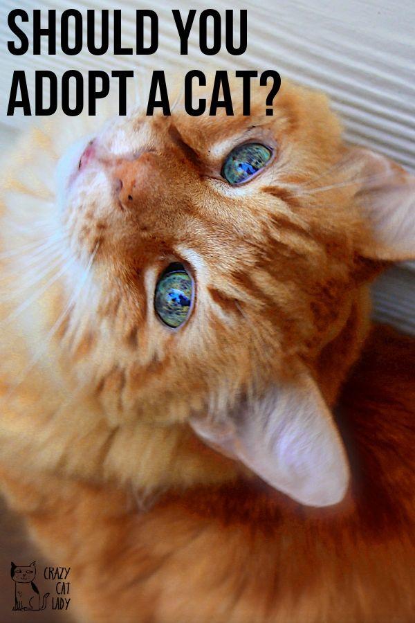should you adopt a cat?