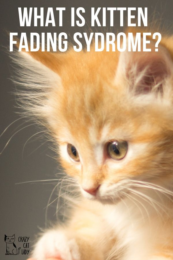 Worried that your kitten is showing signs of kitten fading syndrome? Don't fret, this is what you need to be looking out for!